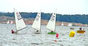 OK Sailing at swedish championship